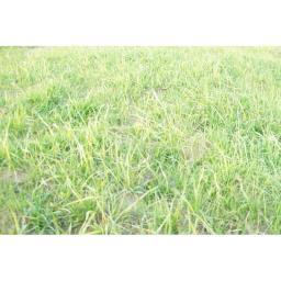 Травосмеси и семена многолетних трав для рекультивации