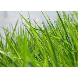 Многолетние семена и травосмеси