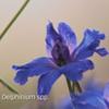 Бизнес-план выращивания цветов