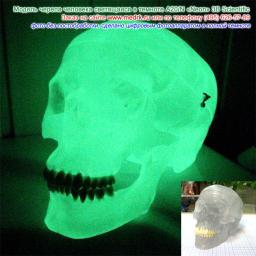 Модель черепа светящаяся в масштабе 1:1