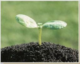 Растительный грунт (с доставкой) 14 м3