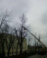 Спил деревьев аварийных ветвей Расчистка участков