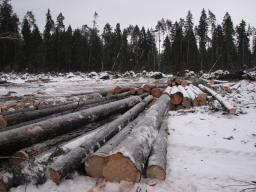 Порезка деревьев. Вырубка лесополос.