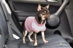 Вязание крючком одежды для собак.