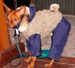 Вязание одежды для собак. Услуга. Прядение – Вязание.