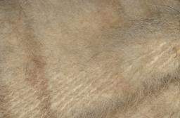 Пояс из собачьей пряжи. Народные методы лечения ревматизма