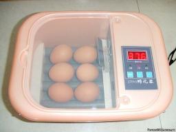 инкубатор автоматический на 6 яиц.