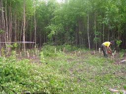 Разработка садового участка