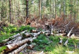 Вырубка лесных насаждений