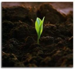 Чернозем / плодородный растительный грунт с доставкой по Краснодару
