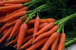 Морковь от производителя РБ