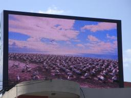 Светодиодный экран Т68, Р10 12 кв.м