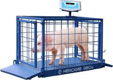 Весы платформенные для взвешивания животных серии ВСП4-60ЖсО