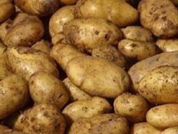 Картофель (РБ) калибр 5+ со склада в Москве
