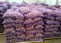Картофель оптом от производителя по России