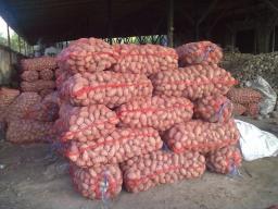Картофель оптом от 10т с доставкoй