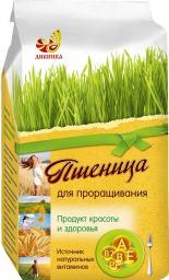 Пшеница для проращивания (зерно)