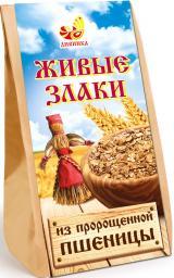 Живые злаки из пророщенной пшеницы.