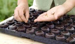 Торфяные (Торфо- перегнойные) таблетки Джиффи, диаметр 41 мм,1000 шт/кор