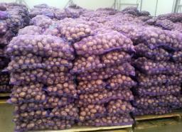 Картофель оптом 5+ от производителя/от 7,5р/кг