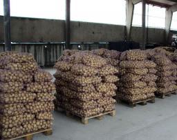Картофель оптом от производителя. доставка по РФ