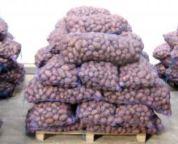 Картофель оптом 5+. Розалинд, венета, колобок