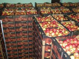 Яблоки оптом со склада в Москве