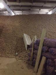 Картофель оптом 5+ (белый, красный)от производителя/от 7,5р/кг