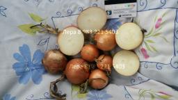 Лук репчатый 8,00 руб/кг