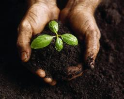 Земля плодородная для сада с доставкой