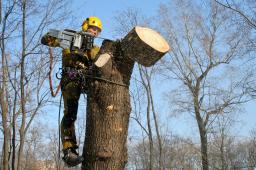 Услуги по спиливанию деревьев
