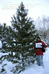 Деревья (крупномер), кедр сибирский, стандарт, 380-420 см.