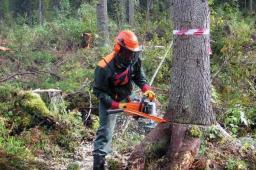 обрезка вырубка деревьев