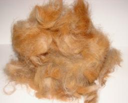 Шерсть собачья куплю. Шерсть бельгийской овчарки (грюнендаль)