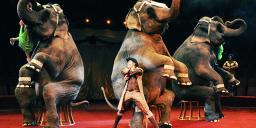 Романтическое свидание в цирке