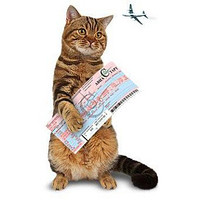 Переезд по РФ с пассажирами и дом. животными