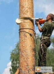 Стрижка деревьев