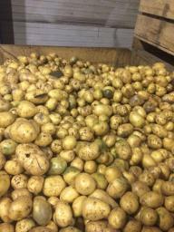 Мытый картофель на переработку