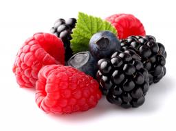 Натуральный концентрат морса Лесные ягоды 5 кг.