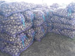 Картофель Гала в Кемерово, свежий урожай