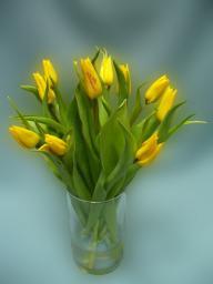 Букет из тюльпанов, 585р