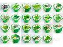 Зелень в горшке