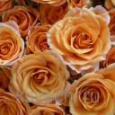 Ароматизатор Чайная роза, 50 мл