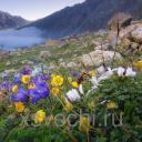 Ароматизатор Альпийские цветы, 50 мл