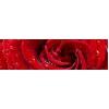 Кухонный фартук 2030х610x3,2 мм Красная роза