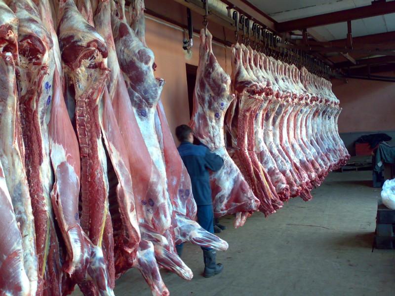 Курск поставил на столичные прилавки говядину с паразитами
