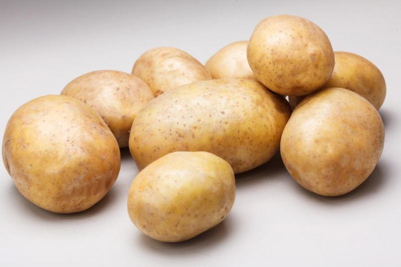 Картофель ривьера характеристика сорта отзывы