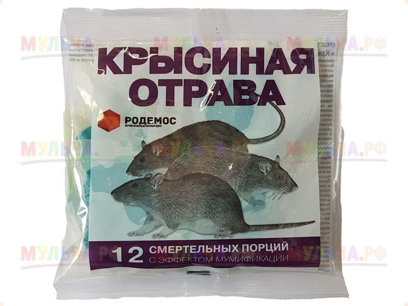Яд для крыс в домашних условиях
