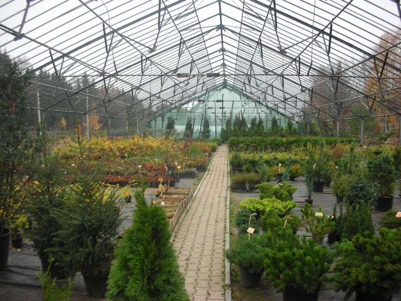 Выращивание декоративных кустарников в теплице