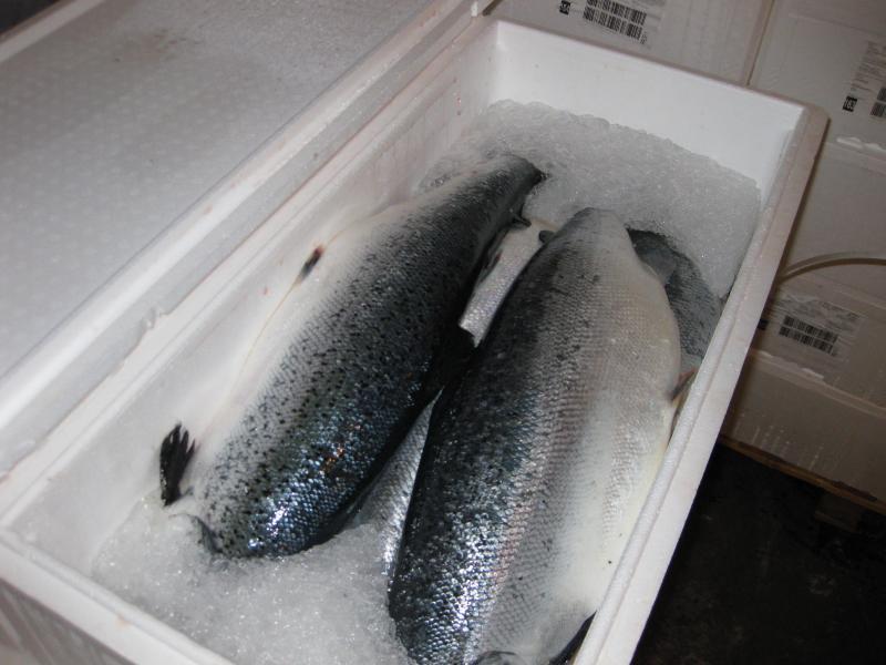 выборе рыбная база цены форель одинцово мембранный
